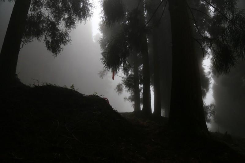 Lesní trail.